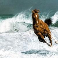 Égua Xucra