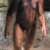 A evolução do gênero Homo