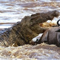 Crocodilos, jacarés e répteis similares