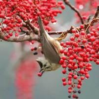 Zhang She, fotógrafo de aves chinesas