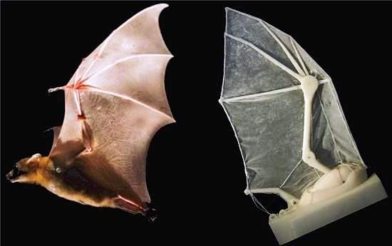 Asas de morcego robóticas