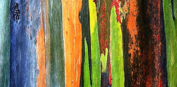 Floresta no quadro-negro