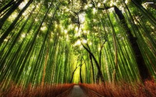Trecho de mata nativa de bambu