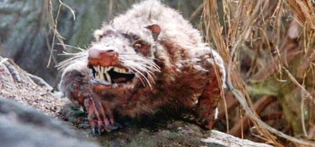 A horrenda imagem da ratazana gigante esfomeada