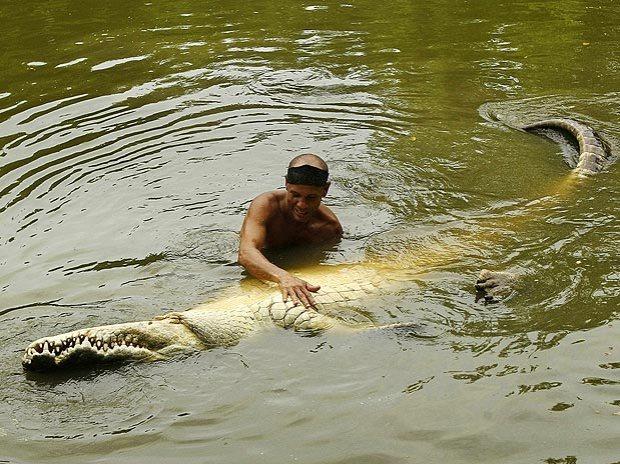 O crocodilo assassino docilizado pela substância orgânica