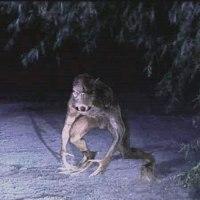 O retorno do Chupa-Cabra