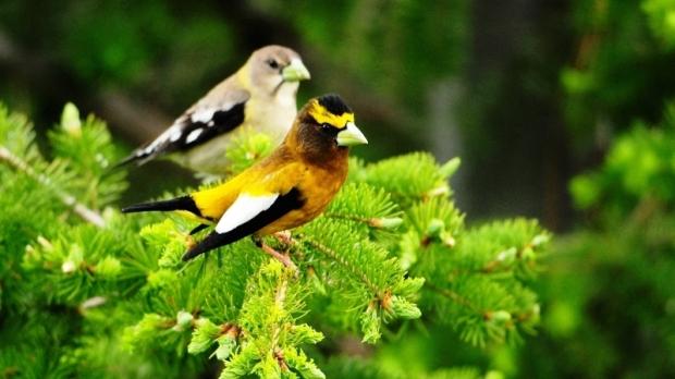 Pássaros encontrados na região