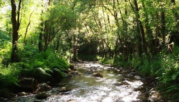 Resultado: ambiente terrestre preservado