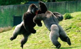 Dois monólogos em combate selvagem