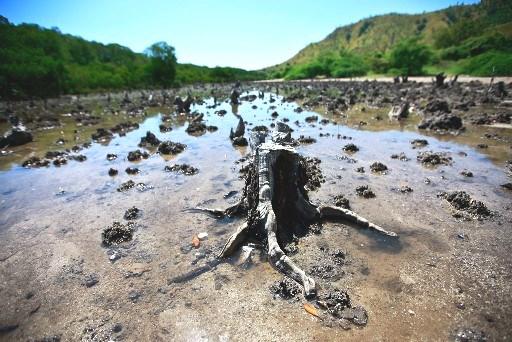 Imagem de manguezal devastado